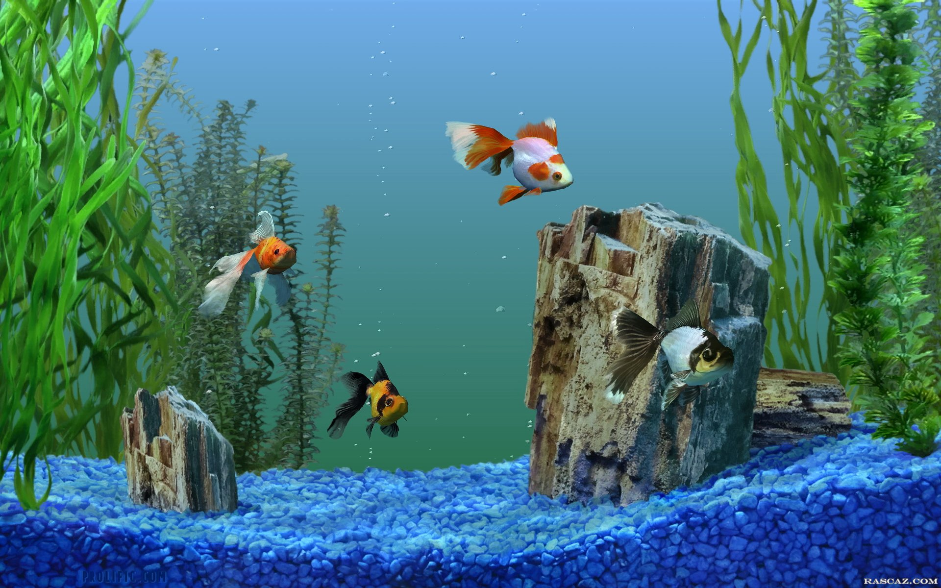 Цветной щебень в аквариуме